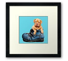 Cute Puppy In Boot Framed Print