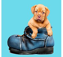 Cute Puppy In Boot Photographic Print