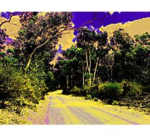 Bush road Photographic Print