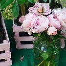 Pink Peonies in a Vase by Christine Wilson