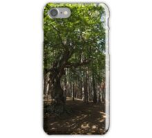 Venerable Forest Guardian - an Ancient Beech Tree Guarding a Pine Forest iPhone Case/Skin