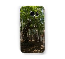 Venerable Forest Guardian - an Ancient Beech Tree Guarding a Pine Forest Samsung Galaxy Case/Skin