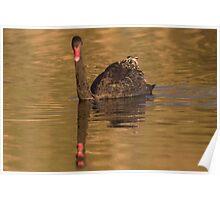 Dusk Swan Poster