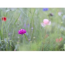 Poppies and Cornflowers Photographic Print
