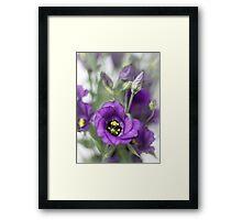 A purple dream... Framed Print