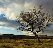 Hawthorn Isolation by Angie Morton