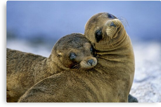 Sweethearts by Norbert Probst