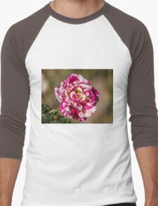 The Variegated Rose Men's Baseball ¾ T-Shirt