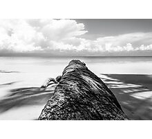 Fallen palm tree in black and white Photographic Print