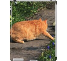 Ginger cat hunting on garden path iPad Case/Skin