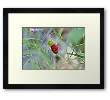 Lone Berry Framed Print