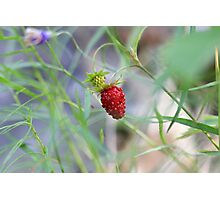 Lone Berry Photographic Print