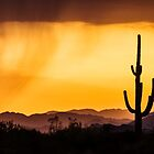 Silhouette before the storm  by ruth  jolly