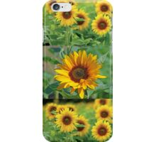 Sunflowers on a Field iPhone Case/Skin