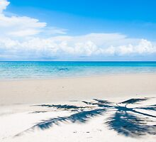 Shadow of palm tree over tropical white sand beach by Stanciuc