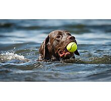 Retrieving a tennis ball Photographic Print