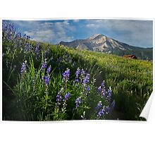 Mountain Lupines Poster