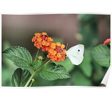 Slightly tone mapped floral photo Poster