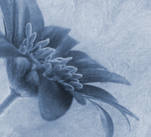 Faded beauty cyanotype Sticker