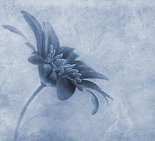 Faded beauty cyanotype by John Edwards