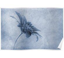 Faded beauty cyanotype Poster
