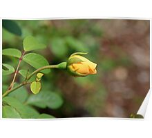 A Wilder Rose Poster