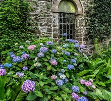 Colourful Hydrangeas by Adrian Evans