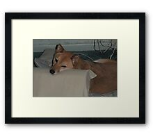 Sporty, Looking Dog Tired Framed Print