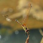 Golden wings by Ikramul Fasih