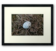 Robin's egg Framed Print