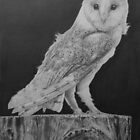 Barn Owl by Mike O'Connell