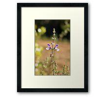 Purple Symmetry  Framed Print