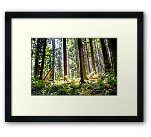 a walk in the woods #2 Framed Print