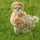 Mad Chicken!! by wenniewombat