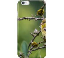 Female American Goldfinch iPhone Case/Skin