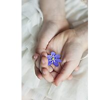 Viola blossom in girl's hands Photographic Print