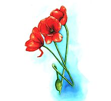 Poppies Photographic Print