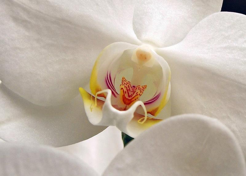 Soft Flower by Kathilee