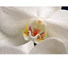 Soft Flower Photographic Print