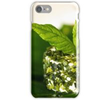Green on green in the middle white  iPhone Case/Skin