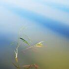 Little plant in a lake near Berlin by Imi Koetz