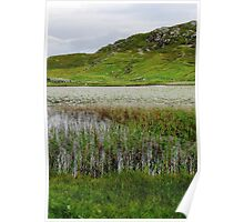 Reeds and Water Lilies - Isle of Lewis, Western Isles, Scotland Poster