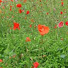 The Poppy Roundabout by Fara