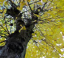Tall Tree Yellow (1) by Vanessa  Warren