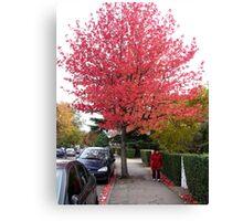 Autumn Colour Everywhere  Canvas Print