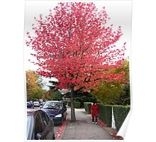 Autumn Colour Everywhere  Poster