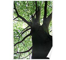 Tree Trunk Tall  Poster