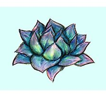 Succulent Drawing Photographic Print