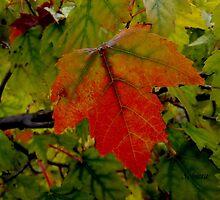 Hello, Autumn by Rosemary Sobiera