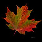 Leaf Me Alone by Rosemary Sobiera